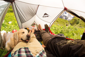 Собака в палатке