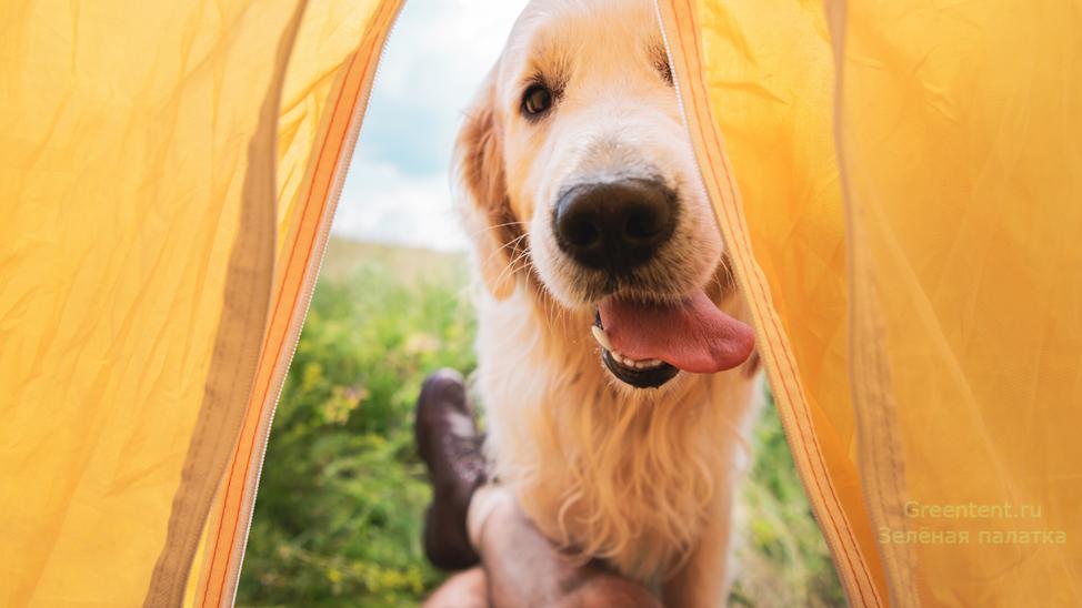 Собака в палатке 2