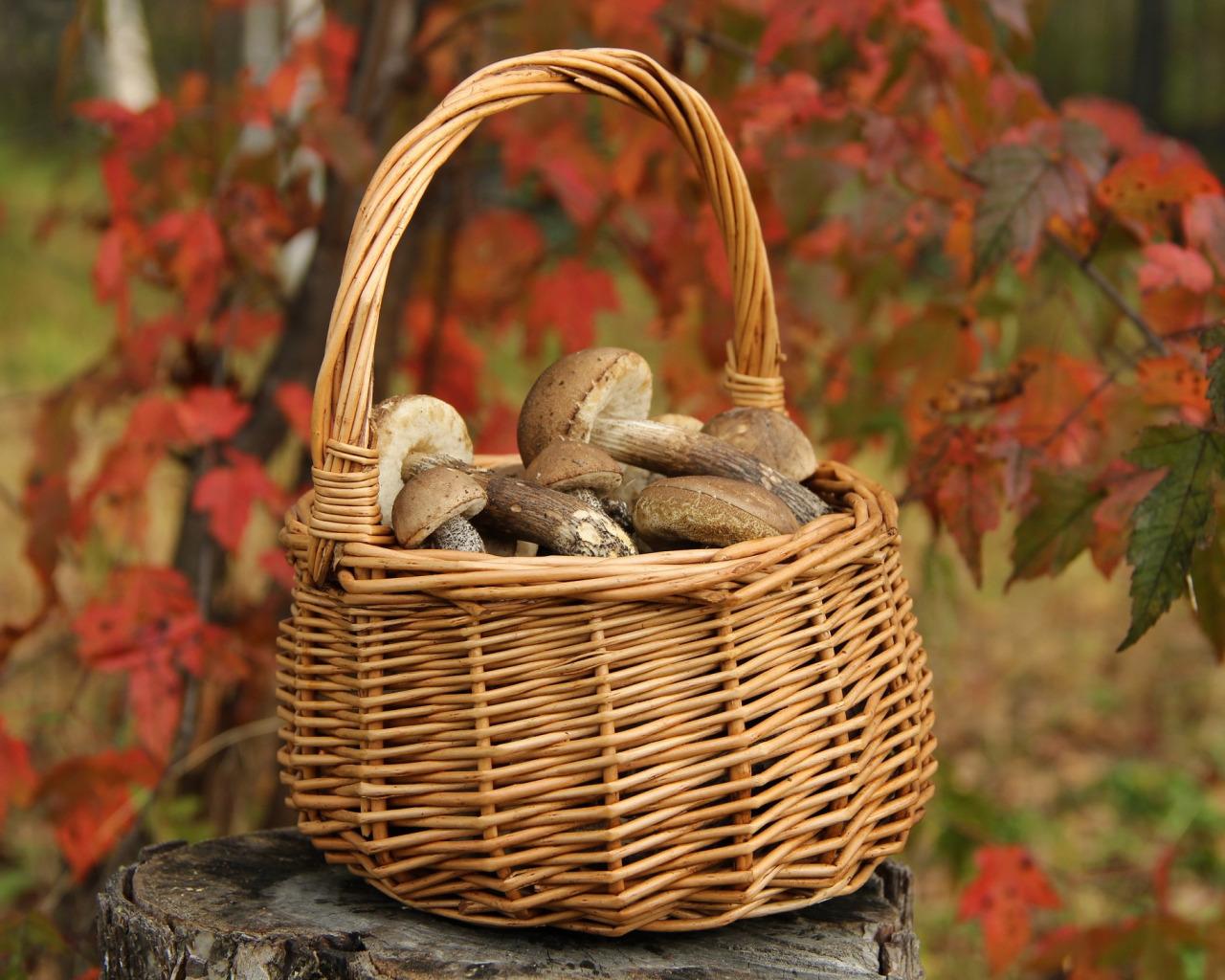 грибы корзина лес природа отдых собирать экология