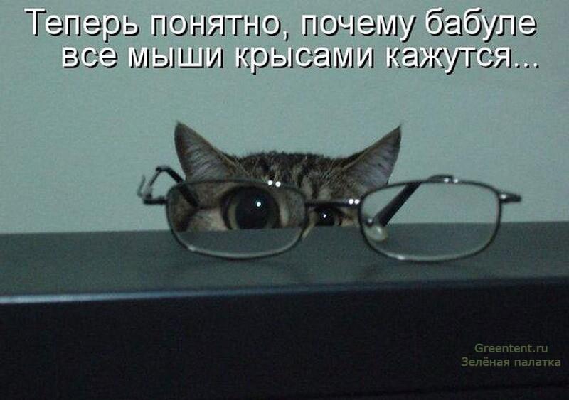 очки кот смешно