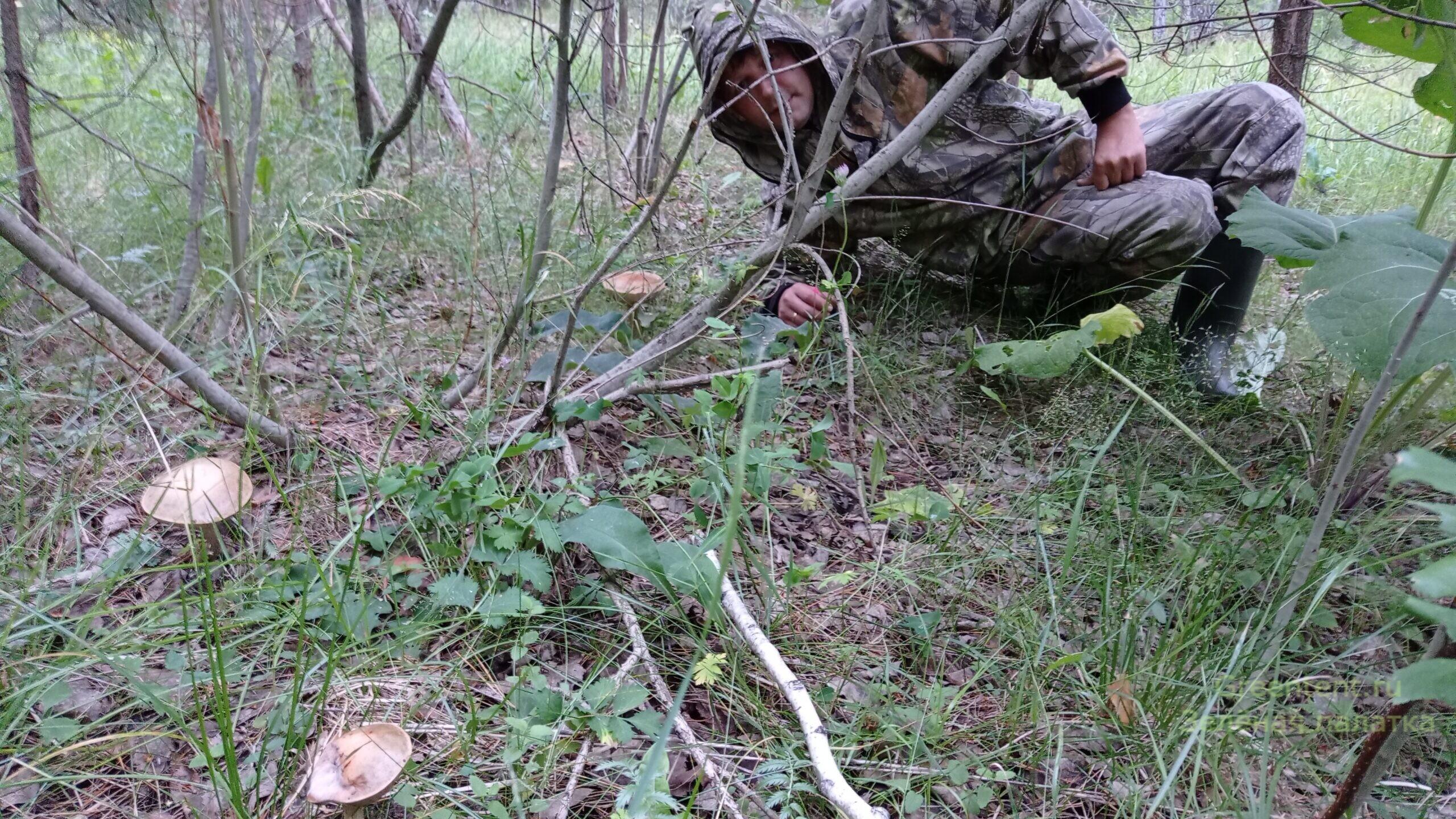 грибные места собирать грибы тихая охота лес природа отдых несколько грибов сразу