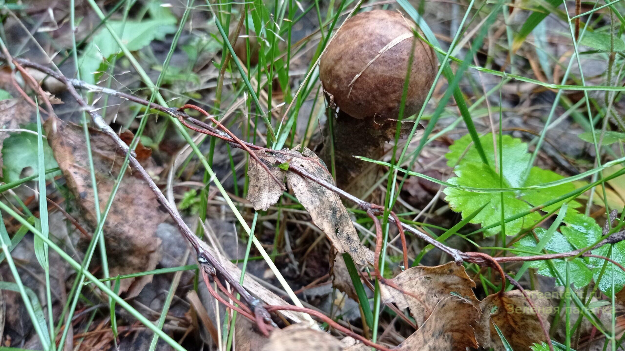 собирать грибы тихая охота лес природа отдых