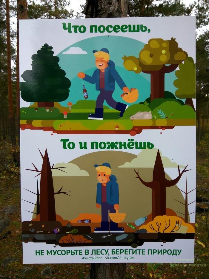 не мусори природа лес экология грибы собирать
